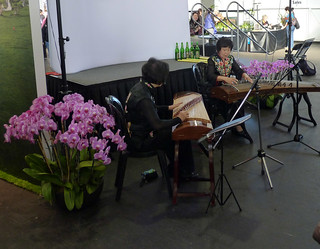 the 2015 pacific orchid exposition, koto players entertain
