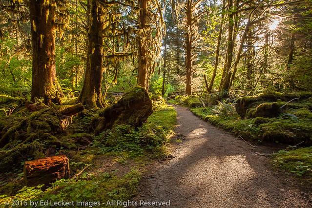 Rainforest Trail, Olympic National Park, Washington