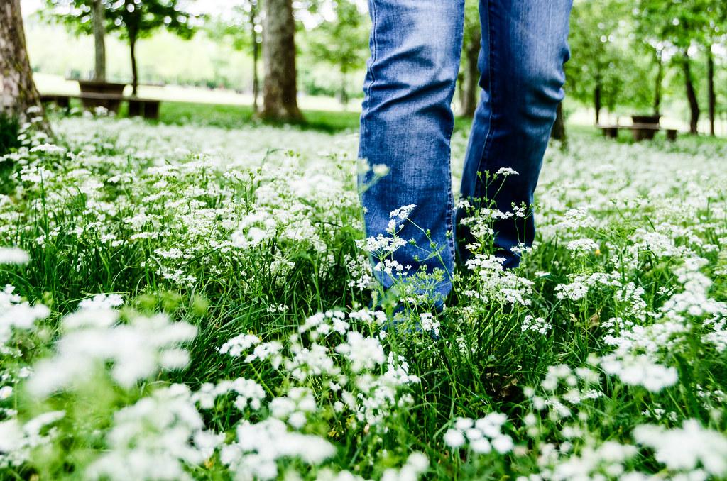 Take a walk among the flowers