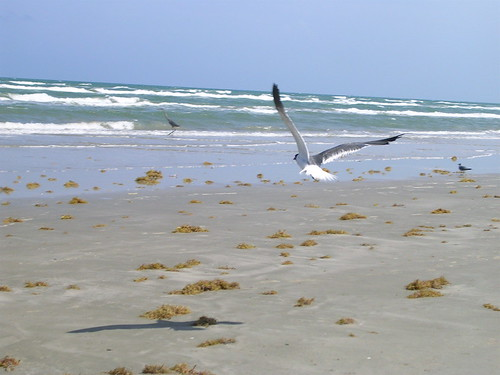 Chasing a seagull | by dground