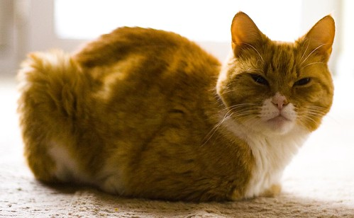 cat loaf | by nishwater