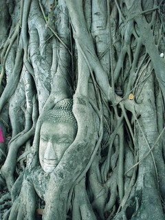 Tree Buddha | by shortie66
