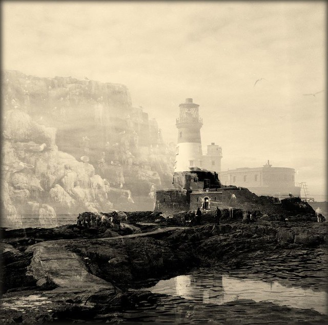 Memories of the Farne Isles