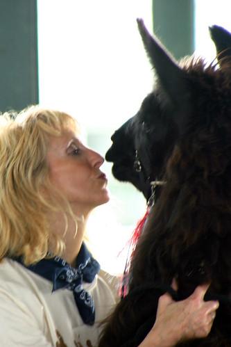 Kissing Llamas   by lille*hjem