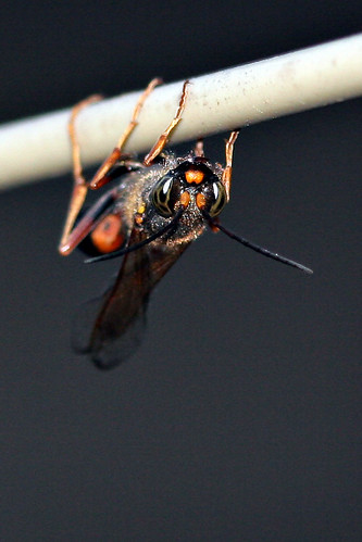 Wasp #2