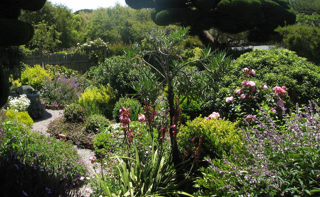 Sally Robertsons Garden in Bolinas