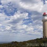 Viajefilos en Australia. Kangaroo 28