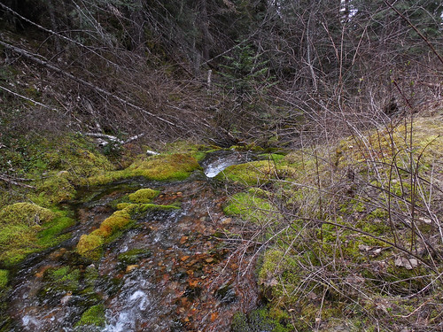 Ashley Creek trail 454 | by Montucky