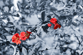 Red | by 2benny