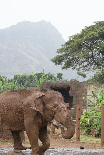 Indian Elephant and Diamond Head | by HelenPalsson