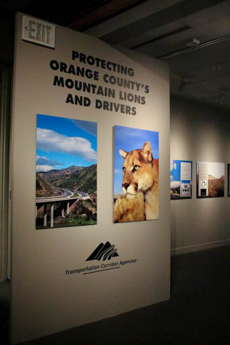 Learn how one government agency is committed to protecting mountain lions and drivers through the use of special fencing; wildlife undercrossings; surveillance; and GPS tracking.