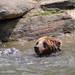Flickr photo 'Bronx Zoo_2015 05 24_0140' by: HBarrison.