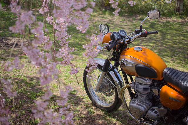 the flower and the iron horse