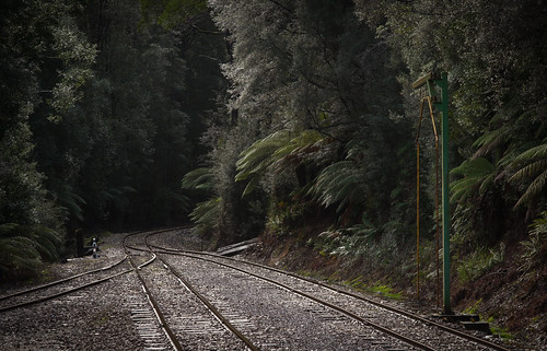 Wilderness Railway | by Andrew Shepherd