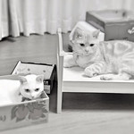 Instagram Photo [marikobiz]