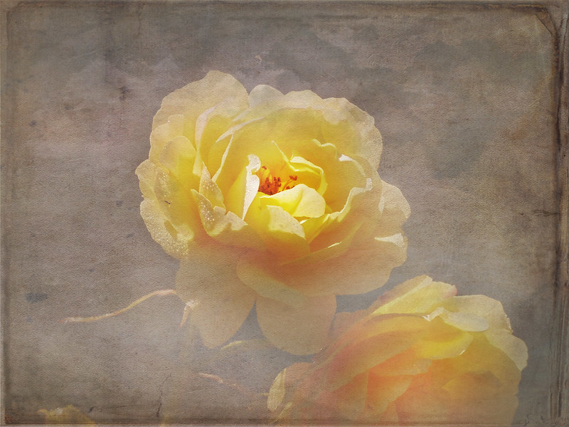 The soft essence of vanished flowers