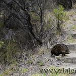 Viajefilos en Australia. GOR  028