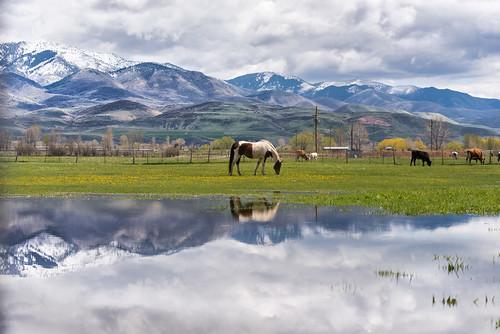 wasatchmountains i84 trappersloop wasatchrange morganvalley morgancounty horses cows westtoeastcoastroadtrip utah mountaingreen pixelmama explore