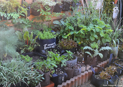 Root Pouch Kitchen Garden | 2018.04.22 | by Katsushige Bon Terada