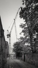 Congregation of Cranes