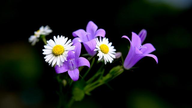 Flora - 5191