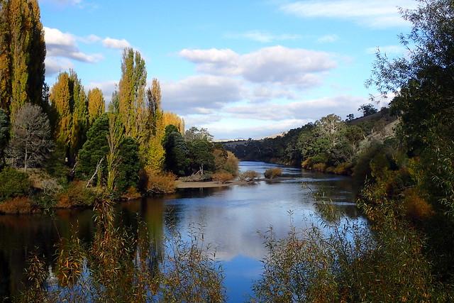 Autumn Colours - Derwernt River - New Norfolk