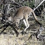 Viajefilos en Australia. Adelaida 44