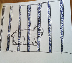 Bunny fenced
