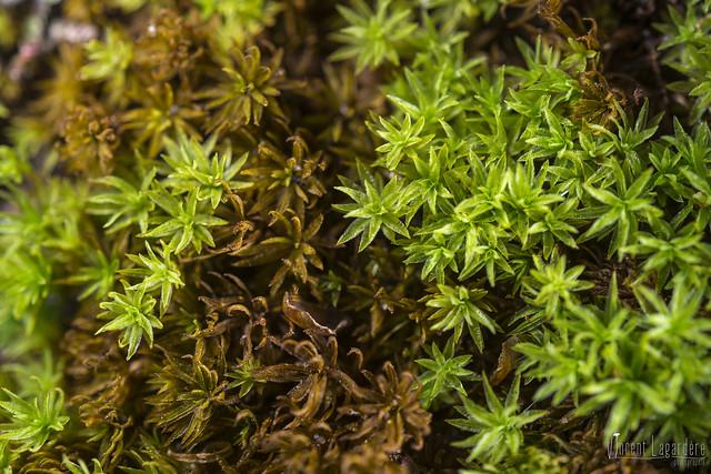 Old ones, new ones... (moss)