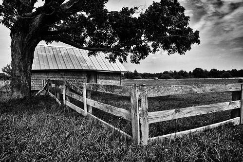 grass barn tree old weathered landscape mi bw wood beaverisland fence michigan unitedstates us