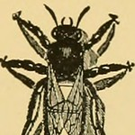 "Image from page 112 of ""American bee journal"" (1861)"