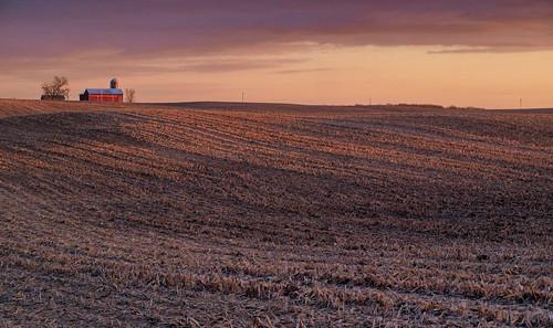 sunset corn farmland rolling stubble