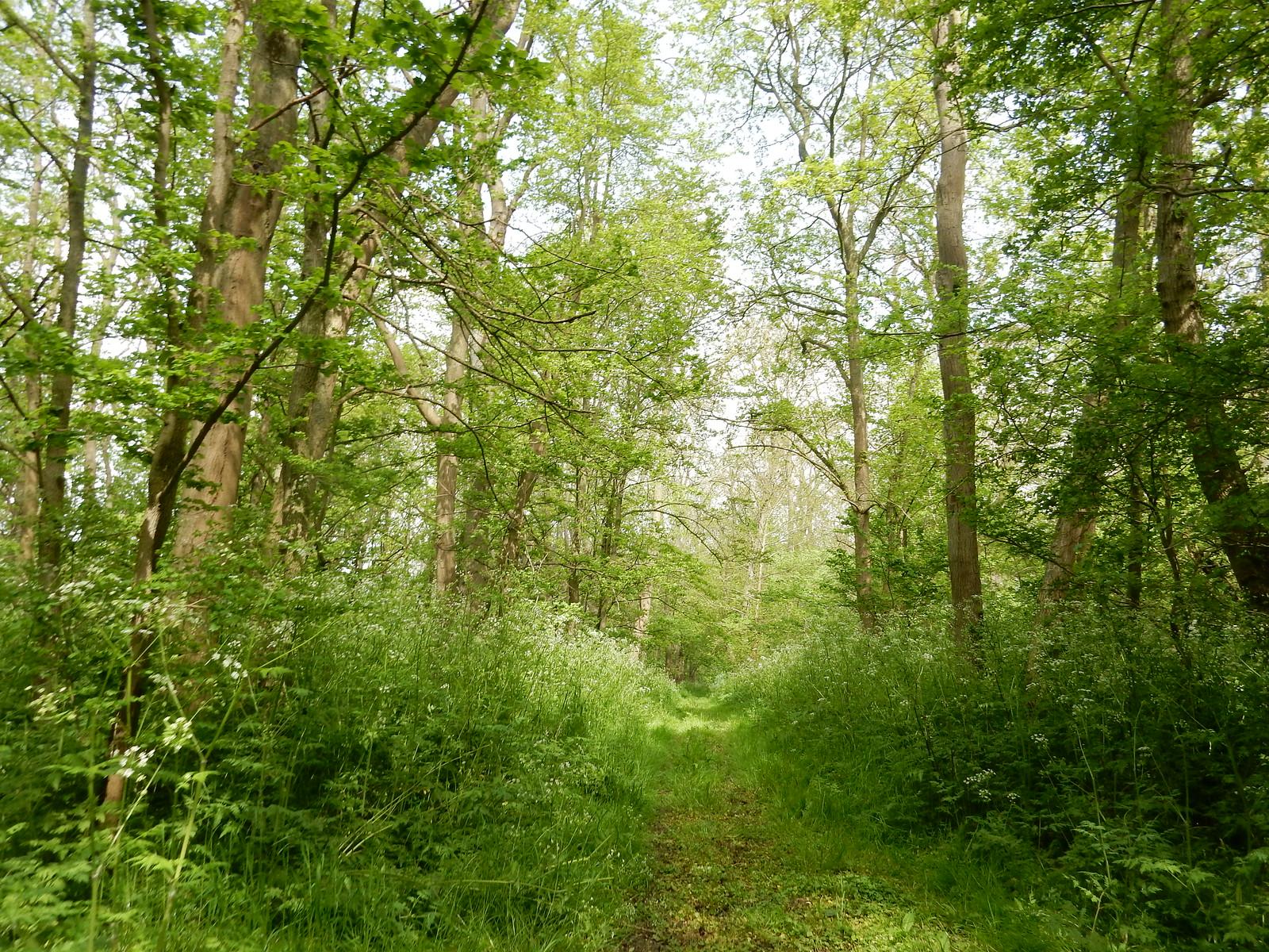 Park Wood Baldock Circular