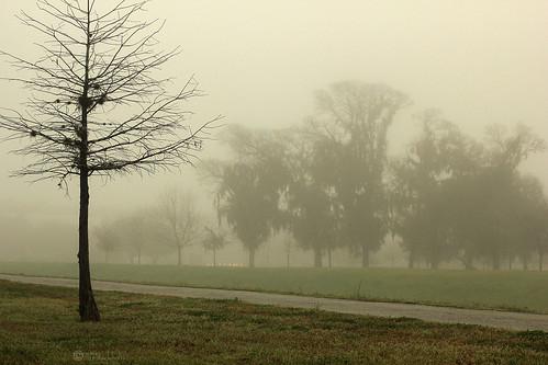 mist nature fog landscape texas houston bayou baldcypress labrume janbuchholtz