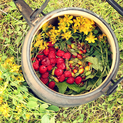 Alternative herbal Tea. Tutsan flowers, currant leaves, dog-rose fruits, head clovers and raspberry. | by Lora Sutyagina