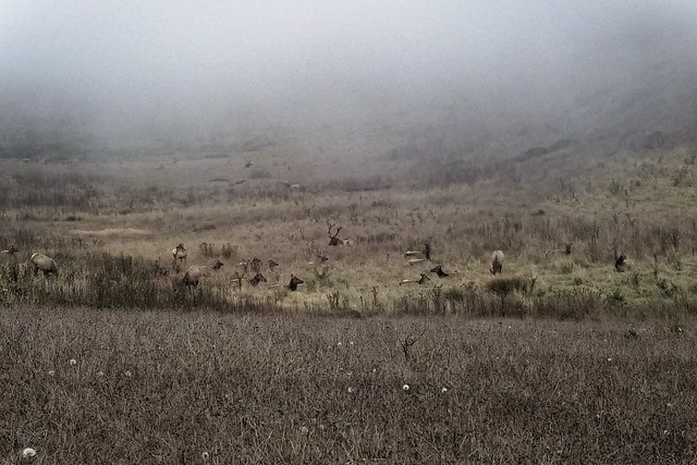 Tule Elk Preserve at Point Reyes National Seashore