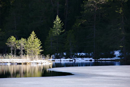 sunset lake tree green ice water pine forest austria tirol seefeld