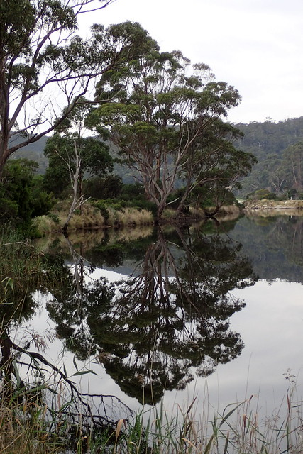 Reflections - Captain Cook Creek - Bruny Island