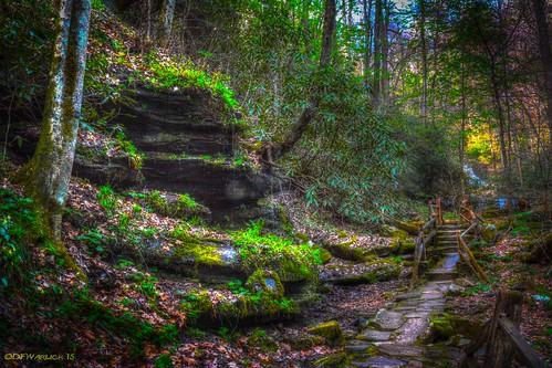 postprocessed forest woods unitedstates path northcarolina trail splitrail saluda pearsonstrail