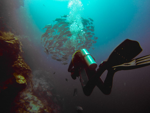 Diving near Bohol | by eddy.kamalsky
