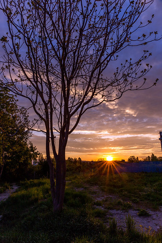 cloud tree sunrise sofia sunstars mladost1a