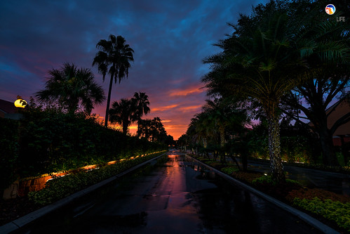 sony a7r2 sonya7r2 ilce7rm2 zeissfe1635mmf4zaoss fx fullframe scenic landscape sky clouds sunrise shadows silhouettes tropical palmtrees reflections nature outdoors kissimmee orlando florida westgatelakesresortspa