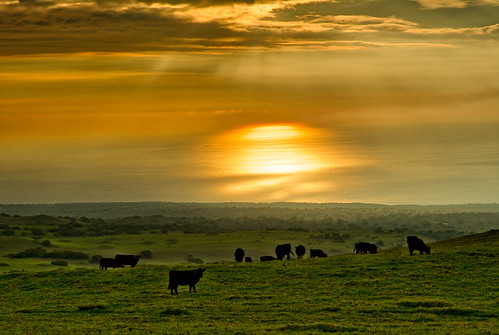 hawaii island cows sunset hazy ocean pacific orange reflections grazing hdr landscapes landscape water