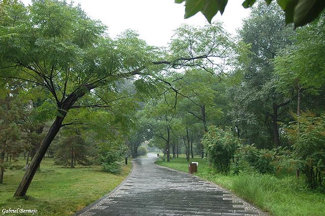 LLuvia en el parque - Xian