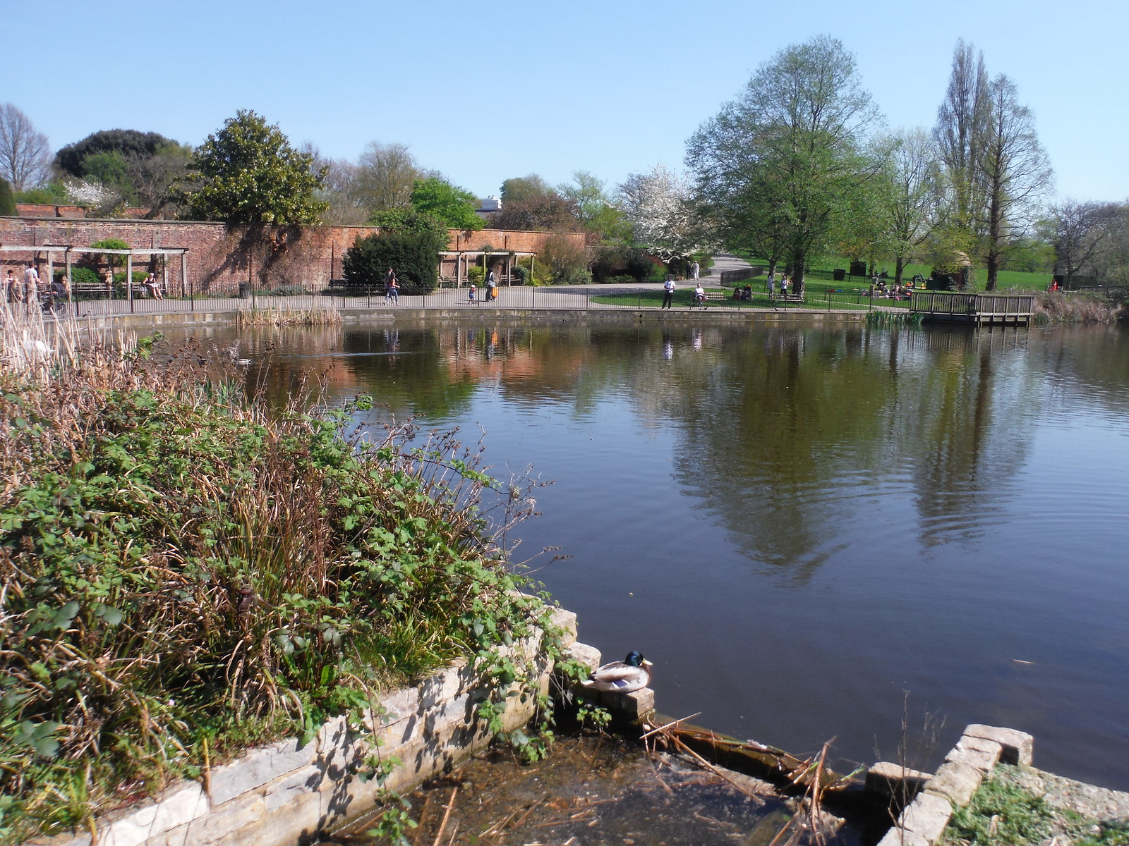 Pond 3 fed by Effra Tributary, Brockwell Park SWC Short Walk 39 - Brockwell Park (Herne Hill Circular or to Brixton)