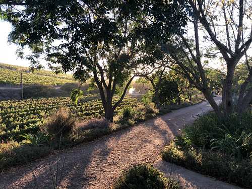 sunrise view jordan wine estate stellenbosch western cape south africa monday 19mar2018 march 2018