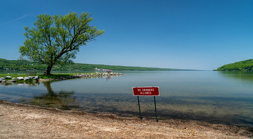 newyork unitedstates watkinsglen tree sign lake senecalake shore water