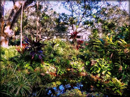 pondstoruinsscenic sugarmillgardens portorangeflorida scenic pond water tropical foliage trees sugarmillruins landscape reflection nature outdoors