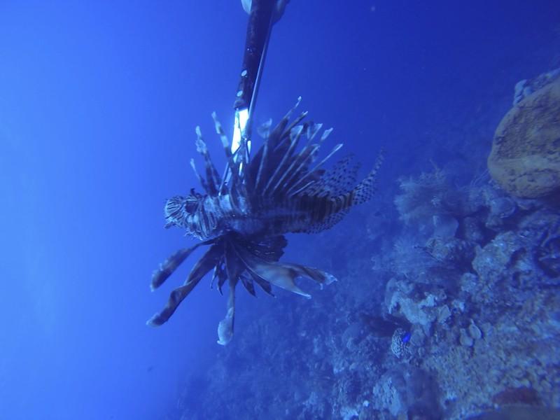 B-Feb 6th 2014 Bonaire Lion Fish Gooodive Go Pro Photos 23