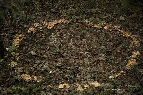 Mushroom Circle | by Christian Doenges